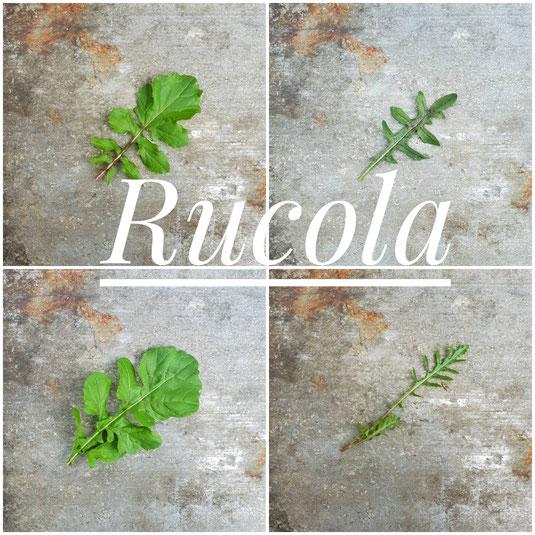 Links im Bild Salatrucola (Eruca sativa), rechts Wildrucola (Diplotaxis tenuifolia)