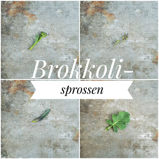 Grüne Sprossenbrokkoli, violette Blütenknospen einer alten Brokkoli-Sorten, violette Sprossenbrokkoli und junges Sprossenbrokkoli-Blatt