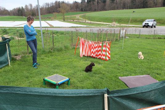 Sabine beobachte die Reaktion von Cobberdog zu Plüschhund auf Distanz