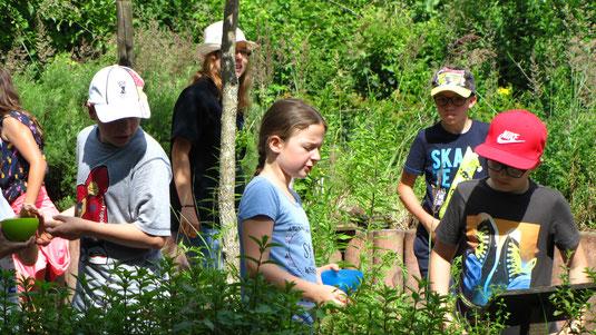 Kinder im Grundschulalter betrachten und pflücken Kräuter im Kräutergarten