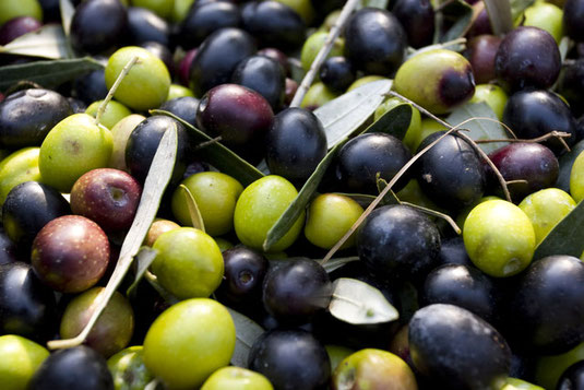 Lagerung Olivenöl