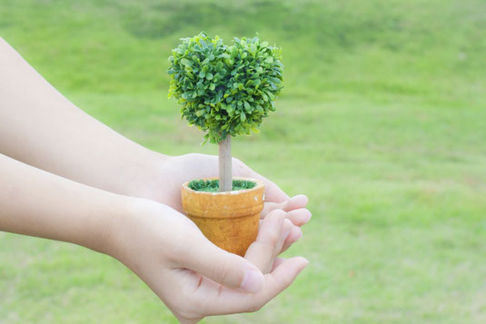 ハート形に剪定された木の葉。小さな植木鉢を抱える手。育てる手。