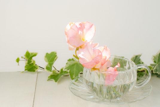 ガラス製のカップ&ソーサに活けられたピンクのスイトピー。