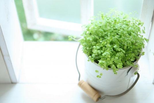 テーブルの上に本が積み重ねられている。その上に時計が置かれている。傍らに観葉植物とマグカップがある。