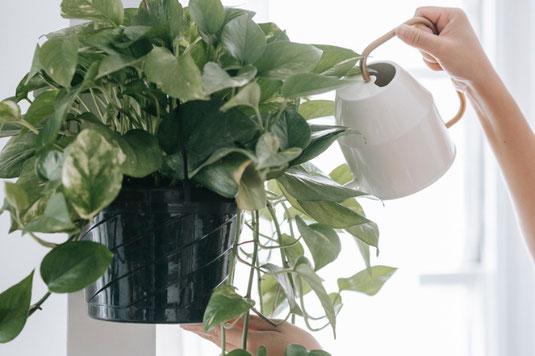 メモ帳と鉛筆。一葉のグリーン。