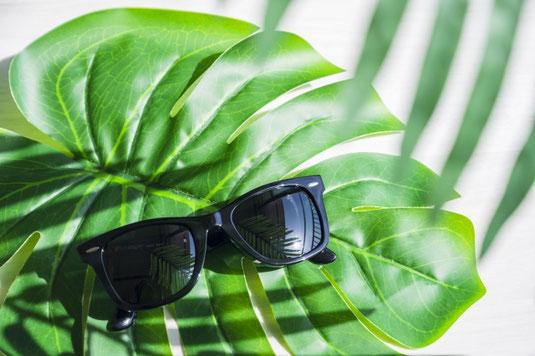 モンステラの葉の上に置かれた黒のサングラス。
