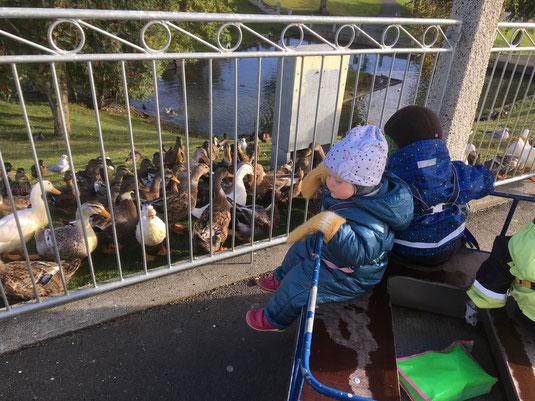 Mit den Kindern aus der Krippe beim Entenfüttern