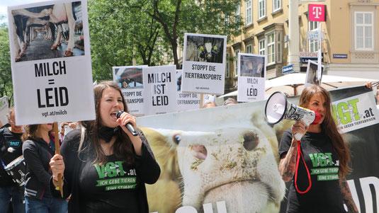 Wien. Tiertransporte stoppen | VGT - Verein Gegen Tierfabriken Sandy P.Peng