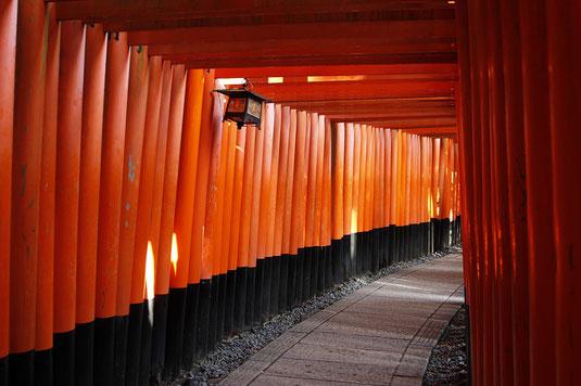 Torii Fushimi Inari mit Laterne
