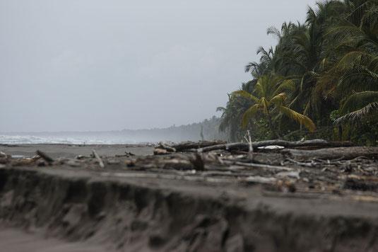 Caribbean coast, Costa Rica, beach, Tortuguero