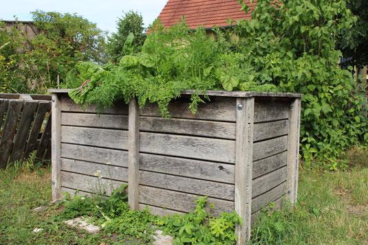 In den Hochbeeten auf dem Gelände des Lindenhofs in Bayreuth sprießt das Gemüse nur so!