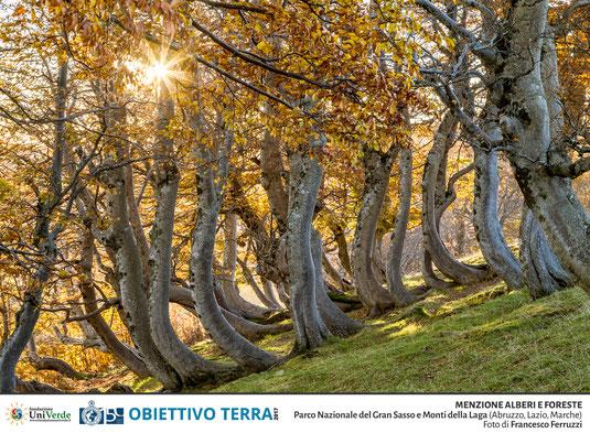 concorso obiettivo terra menzione alberi e foreste