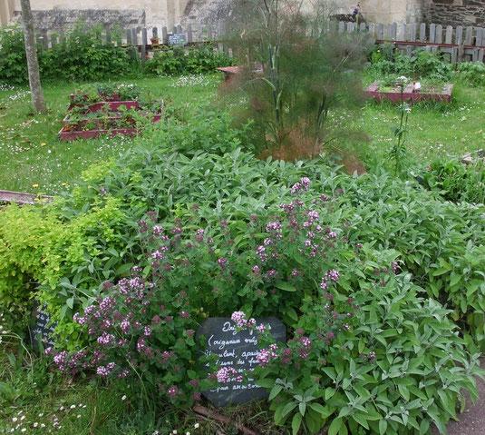 La parcelle de l'église Sainte Croix des Incroyables comestibles à Saint-Lô