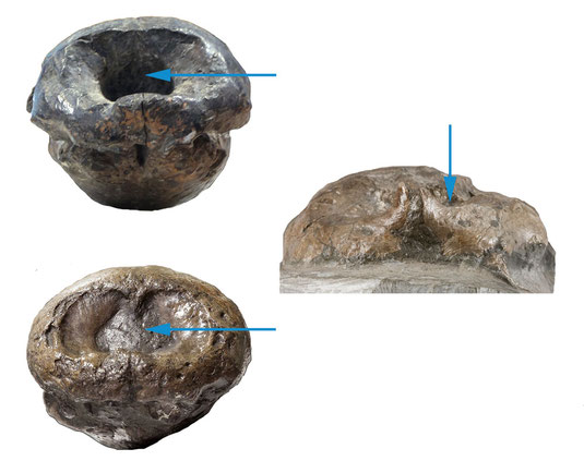 Comparison of nasal openings in Mystriosaurus and Steneosaurus