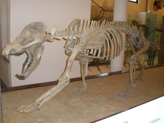 Wolf mythologie mythos wölfe geschichte kultur kulturen mensch menschen magie bärenhund urzeit Skelett