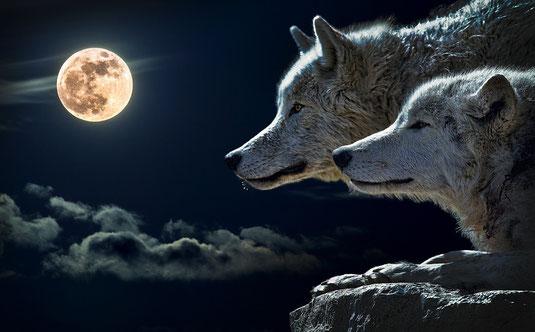 Wolf mythologie mythos wölfe geschichte kultur kulturen mensch menschen magie mond sonne skalli hati