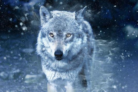 Wolf mythologie mythos wölfe geschichte kultur kulturen mensch menschen magie fenriswolf roggenwolf blog blogartikel