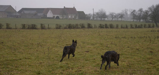 wij genieten allemaal van een lange wandeling door de velden.. Links is Bobbie.