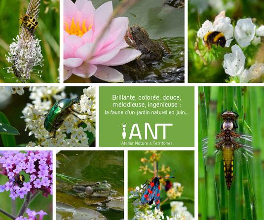jardin, biodiversité, nature, oasis nature, humanité biodiversité, sensibilisation, pédagogique, pédagogie