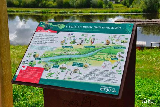 panneau d'interprétation, panneaux pédagogique, signalétique, ludique, illustration, aquarelle, chemin de halage, Mayenne, Maine-et-Loire