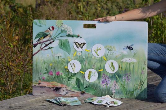 outil pédagogique, pollinisateur, pollinisation, fleur, pollen, papillon, abeilles, cétoine, machaon, bourdon, abeilles solitaires, osmie, malette ludique