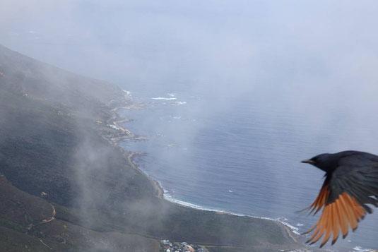 南アフリカで、アカバネテリムクが飛び立つ瞬間をキャッチ