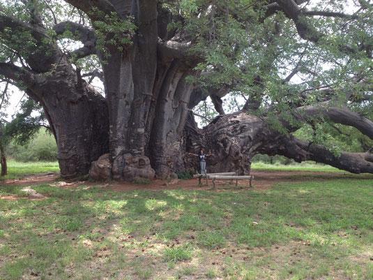 アフリカンツリー バオバブミスト