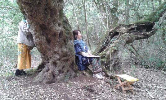 ミルクウッドの木と瞑想中