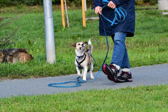 Grunderziehung Hund an der Leine Erlangen