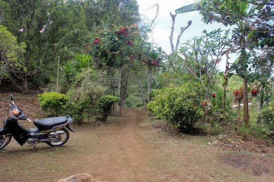 Land for sale by owner in North Bali. Buleleng land for sale by owner. Land for sale near Munduk.