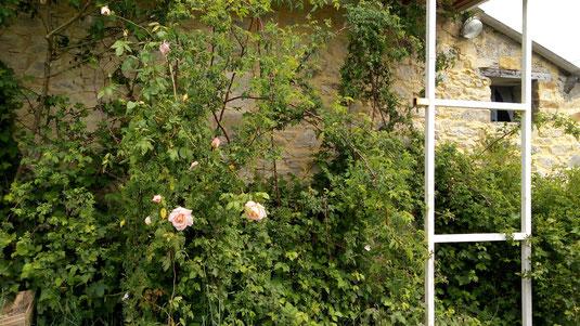 Les roses de la bibliothèque - La Zad Notre-Dame-des-Landes - Mai 2018