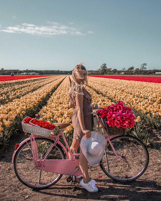 Im Blogartikel dreht sich allesum die Tulpenfelder bei Lisse.