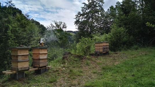 Unsere Bienen bereiten sich auf den Winter vor