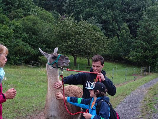 Ein Lama als Integrationshelfer