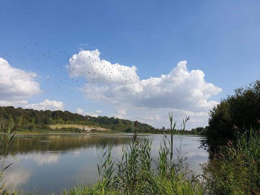 réserve naturel-nature-famille-amis-entreprise-sortir en baie de somme-profiter-temps libre-canal de la somme-vélo route-chemin de halage-hortillonnage-abbeville-