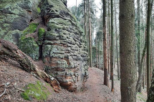 Steile Felsen stehen in einem Wald zwischen alten Bäumen.