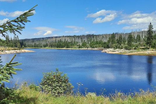 Ein See im Harz schimmert blau in der Sonne. Er ist teilweise  von Wald umgeben. Viele der alten Bäume sind abgestorben.