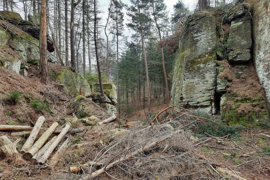 Schroffe Felsen stehen in einem Wald an den Bodensteiner Klippen. Davor liegen umgestürzte Bäume.