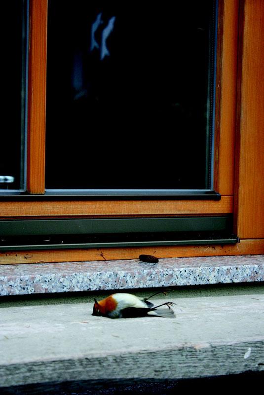 Vogelschlag - Foto: Anne Schneider
