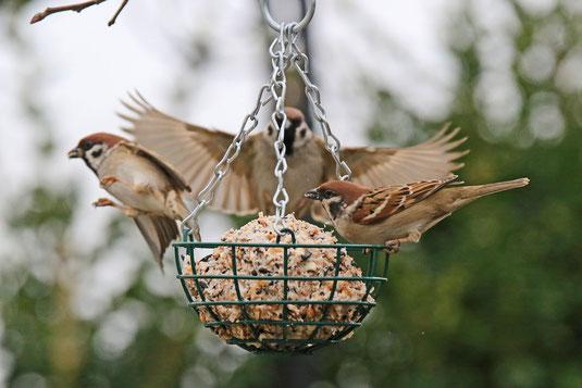 Vogelfütterung - LBV-Bildarchiv Foto: Ingo Rittscher
