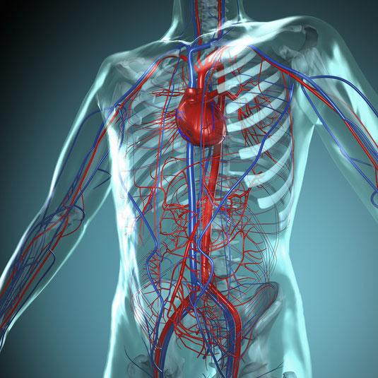 Durchblutungsstörungen | Dr. med. Gerald E. Müller