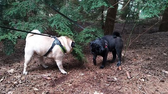 Baloe en Apie in het bos