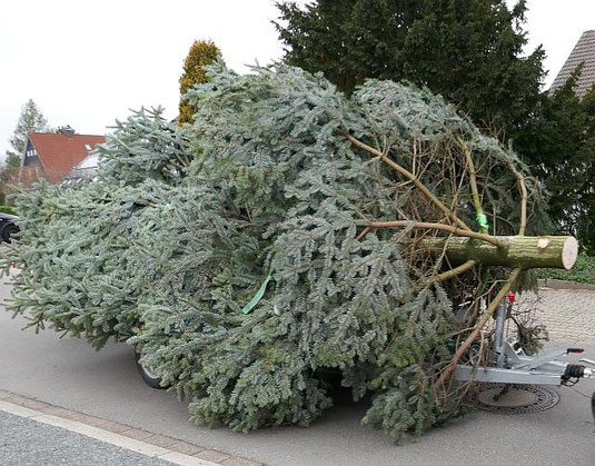 Abtransport eines Weihnachtsbaumes