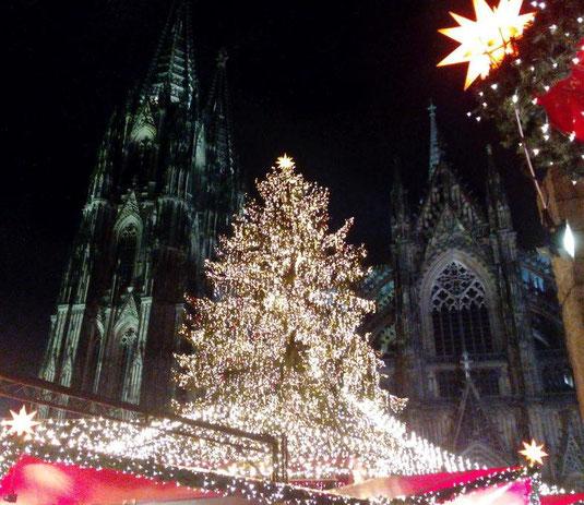 Weihnachtsbaum 2017 vor dem Kölner Dom