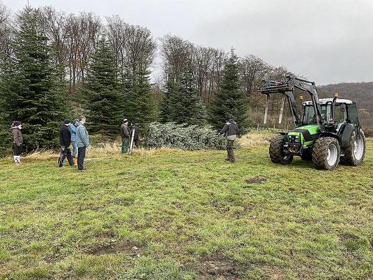 Foto mit gefälltem Weihnachtsbaum, Traktor und Helfern
