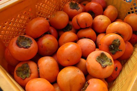 柿酢の原料の柿が籠に入っている様子