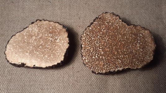 Mikrobiologische Untersuchungen im Jahr 2004 ergaben, dass es sich beim Burgundertrüffel und beim Sommertrüffel um eine einzige Art handelt.