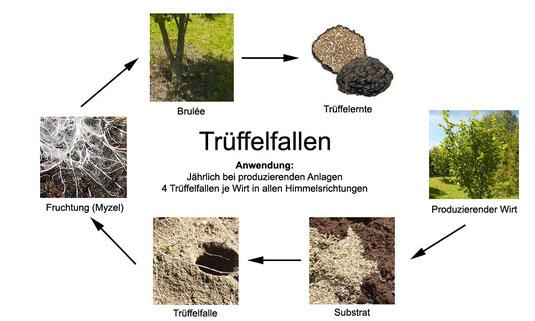 Die Methode der Trüffelfalle kann nicht nur wie bisher üblich bei bestehenden Trüffelplantagen zur Alternative zum Trüffelhund oder mittels der Trüffelfliege