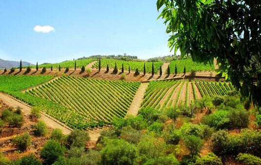 Ein Geheimtipp für ihre Trüffelreise nach Nordspanien - Trüffel und Wein - Somontano ist das kleine Piemont. Diese kleine Region hat kalte Winter und kurze heiße Sommer, genießen Sie viel Ruhe und unendliche schöne Natur.