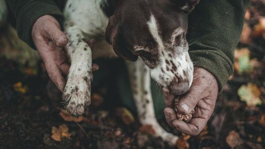 Die Trüffelhundeausbildung kann man in Hundeschulen auf Trüffelplantagen oder in der Natur machen